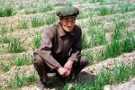 Fao, sbloccare potenziale delle aree rurali nei Paesi poveri