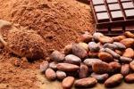 Il cacao brasiliano conquista l'Europa, piace 100% Amazzonia