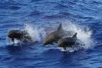Scoperti i 'dialetti' di balene e delfini