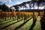 Borsa di studio per viticolture vesuviane antiche-moderne