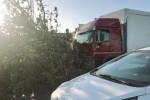 Cade un albero su un camion: tragedia sfiorata a Trapani