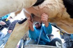 Alibaba porta il latte 100% italiano sulle tavole cinesi