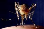 Malaria a Taranto, la malattia contratta in Italia dai 4 migranti ricoverati