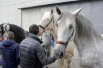 Fieracavalli a Verona, il 'salone' del mondo equestre
