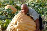 Halloween: Assosementi, zucca piace a tavola e ai produttori