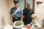 Sorpreso con la droga dal fiuto di Ivan: arrestato a San Giovanni Galermo