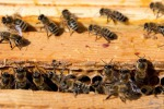 Miele, in 3/4 casi contaminato da una famiglia di pesticidi