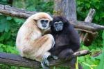 Più piccolo del previsto l'antenato di uomo e scimmie