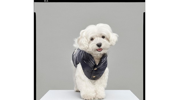 piumini moncler per cani