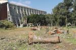 Eucalipti mozzati ad Augusta, aperta un'inchiesta