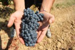 Turismo: Toscana, dal vino al cicloturismo