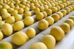 Limone di Siracusa Igp, cresce il Consorzio di tutela