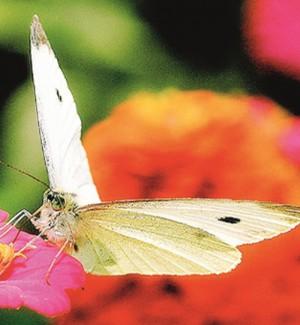 """Nascono a Castellammare i """"giardini delle farfalle"""""""