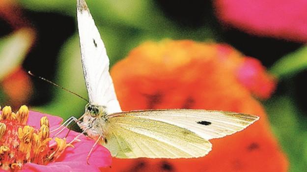 giardini delle farfalle, Trapani, Società