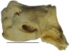 """Scoperti a Siracusa fossili di balena """"ingannata"""" dai mutamenti climatici"""