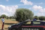 Rubano le olive in un fondo agricolo: due arresti a Mazara