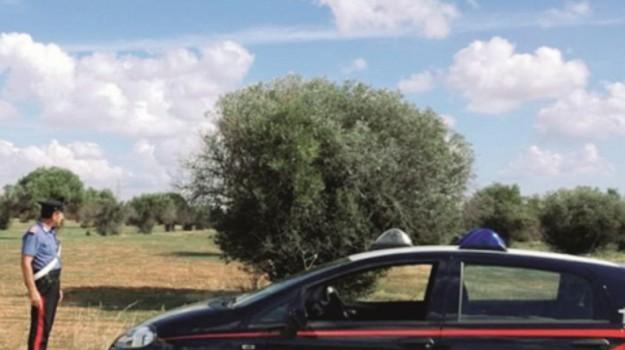 furto olive mazara, Trapani, Cronaca