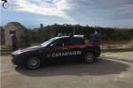 Furto d'uva a Campobello di Licata, in manette quattro ladri