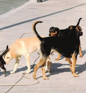 Cani avvelenati a Sciacca: trovate altre esche, un'associazione denuncia il sindaco