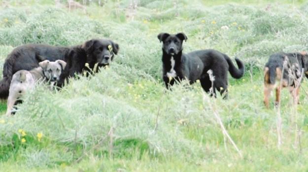 incendio cani morti siracusa, Siracusa, Cronaca