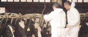 Tubercolosi bovina, nuovo caso a Leonforte