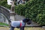 Moda: nasce Emma Firenze, il guardaroba a misura di cane
