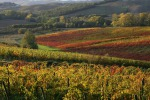 Federdoc-Cnaoc a Bruxelles, Omnibus apre su concorrenza vino