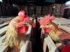 Manovra: Mipaaf, 20 milioni per fondo contro aviaria