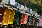 Un alveare hi-tech controlla la salute delle api