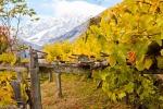Vino: tra Italia e Francia nasce strada dei vitigni eroici