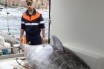 Pesca: Coldiretti,quota Ue tonno rosso aumenta, 1/4 a Italia