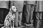 Mostre: rivoluzione Leica, 100 anni di foto e grandi maestri