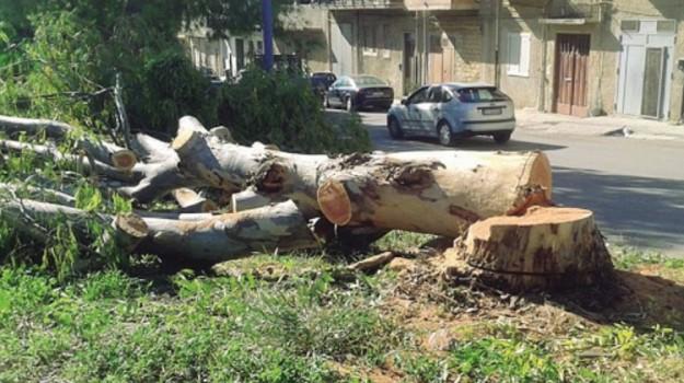 alberi tagliati a ribera, Agrigento, Cronaca