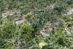 Maltempo nel Ragusano, danni nelle campagne - Foto