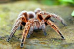 """Insetti, ragni e mosche: nasce il censimento degli """"ospiti"""" indesiderati nelle case"""