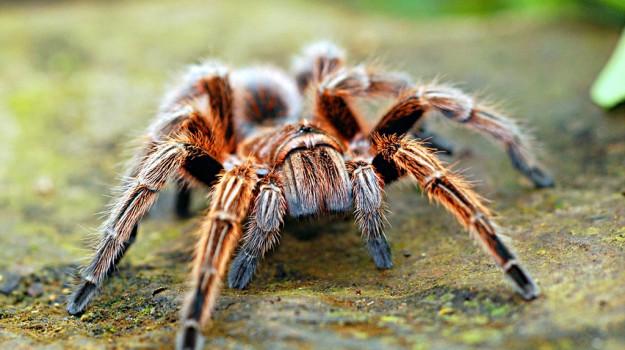 censimento insetti ragni, Sicilia, Società