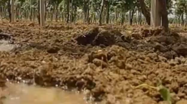 Agricoltura, piano e fondi per il rilancio dei terreni abbandonati