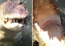 Al coccodrillo non piacciono gli scatti. E cerca di mangiarsi il fotografo