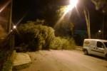 Forte vento su Palermo: alberi per strada e pali divelti, danni anche in provincia