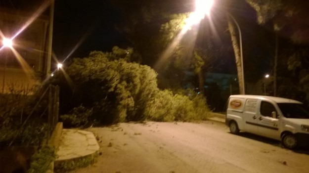 albero caduto caccamo, forte vento palermo, Palermo, Cronaca