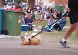 Australia: il cane non vuole andare via dal parco