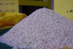 Martina e Calenda scrivono a Ue per tutelare filiera riso