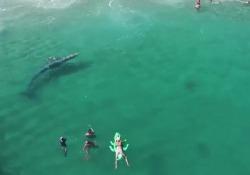 California, la balena si perde tra i bagnanti sulla spiaggia
