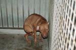Trovati cinque cani malati e abbandonati, blitz a Trapani