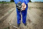 Agricoltura: operai 97%, da centri impiego solo 2% contratti