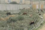 Gagliano, il centro raccolta rifiuti in abbandono
