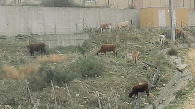 Raccolta rifiuti Gagliano, Enna, Cronaca