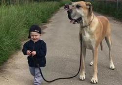 Il gigante (buono) e il bambino. L'amicizia tra il piccolo e il suo cane è commovente