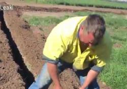 Il salvataggio del canguro finito sottoterra, il cucciolo si ferma e ringrazia il contadino