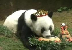 Morto Basi, il panda più vecchio al mondo: aveva 37 anni